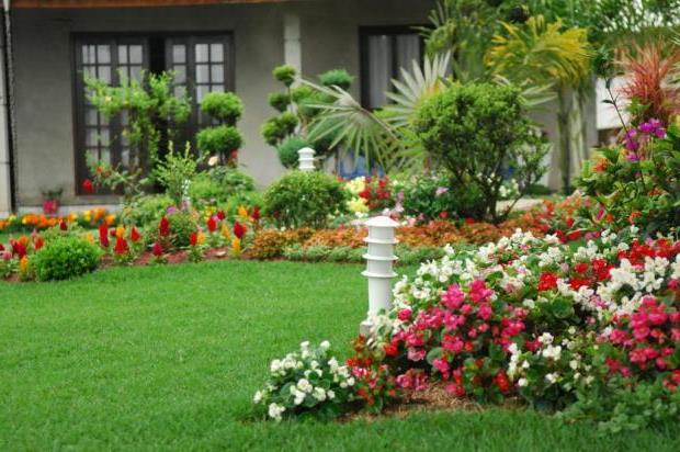Melhores Flores para Jardim - Tatu? Im?veis